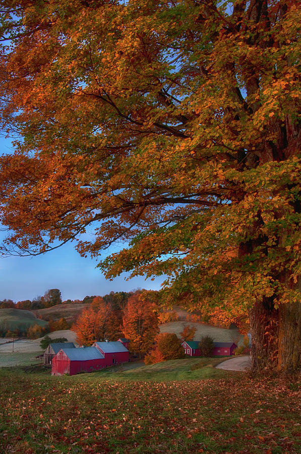Fall on the Farm - Vermont by Joann Vitali