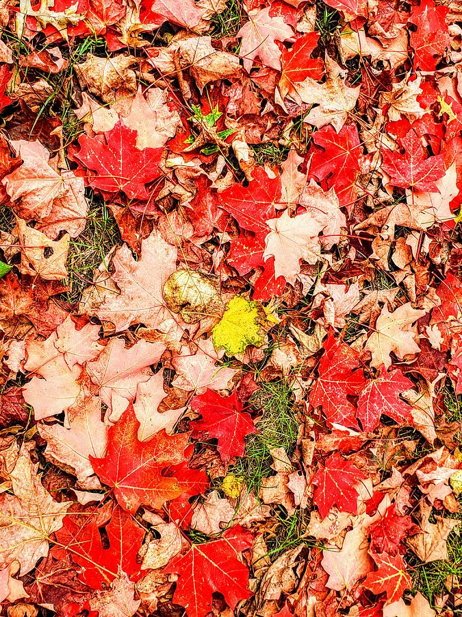 Fall on the Ground  by Paul Kercher