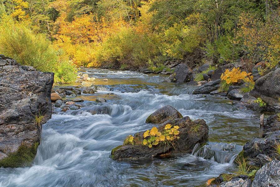 Fall on the Yuba by Tom Kelly