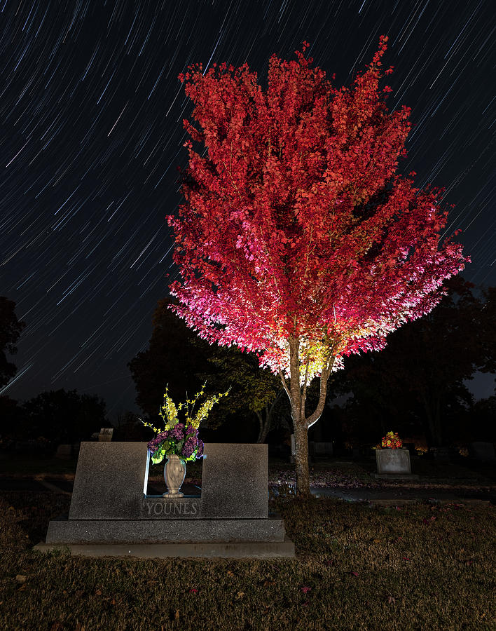 Fall Red at Maplewood Cemetery by Hal Mitzenmacher