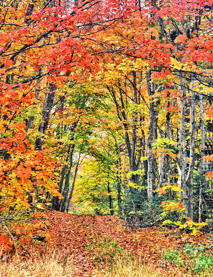 Fall Road by Steve Edwards
