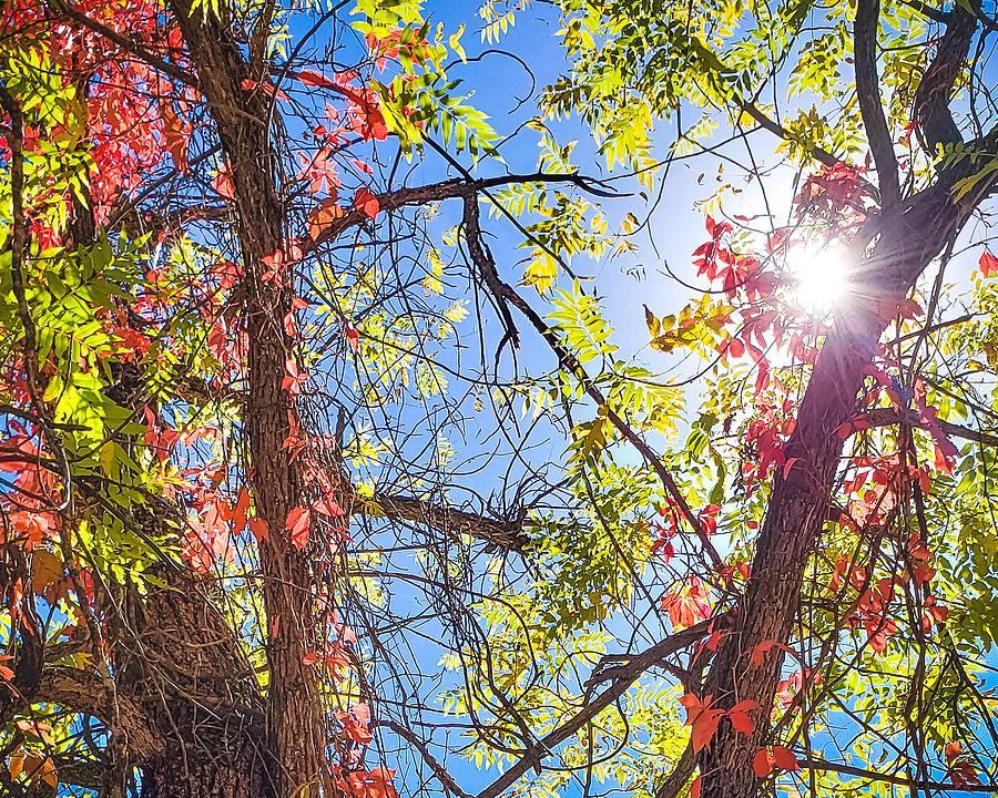 Fall Photograph - Fall Sky by Bonny Puckett