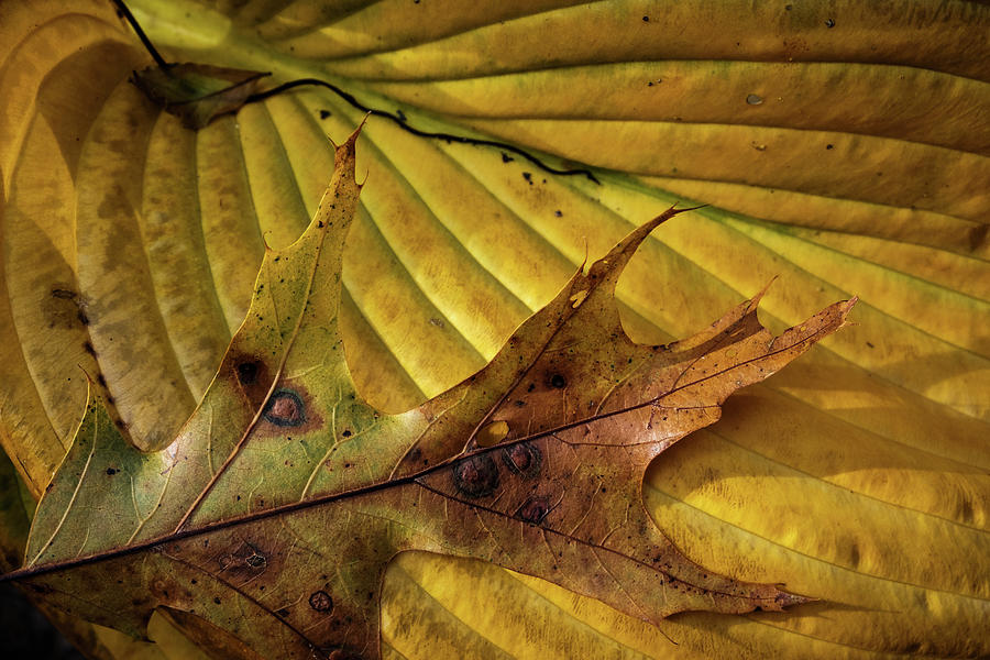 Fall Still Life by Glenn DiPaola