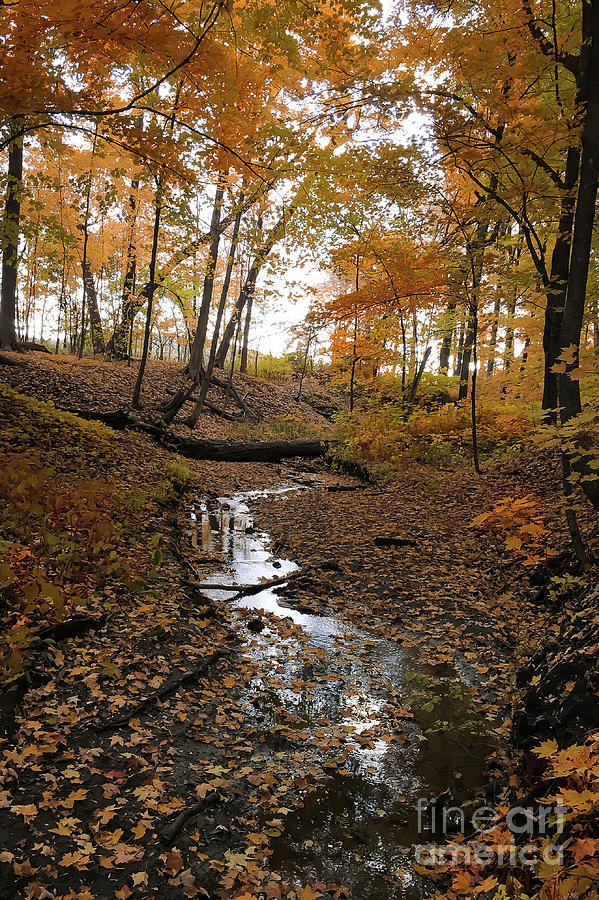 Fall Stream by Sheila Skogen