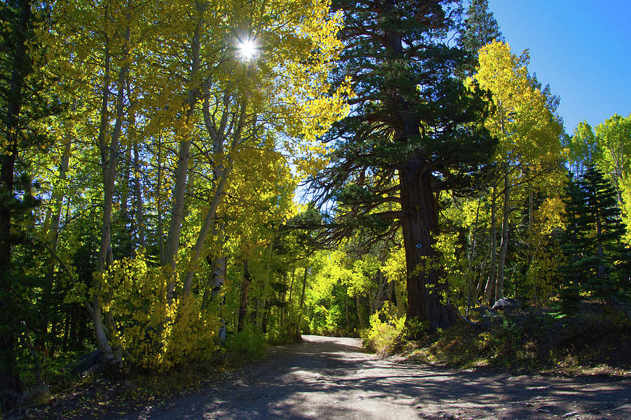 Fall Sunburst by Steph Gabler