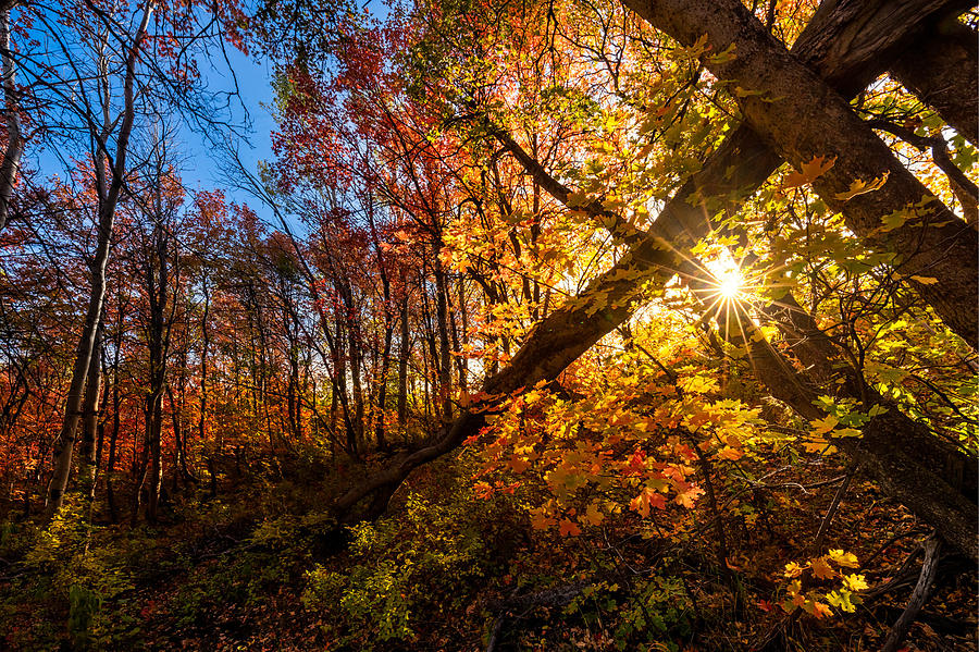 Autumn Leaves Photograph - Fall Sunset by Dave Koch