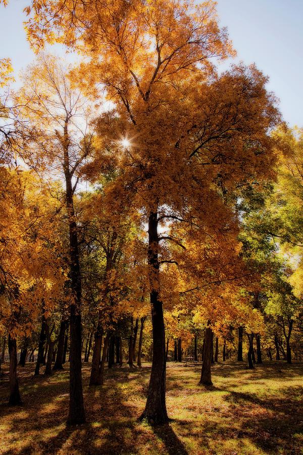 Fall Sunshine by Scott Bean