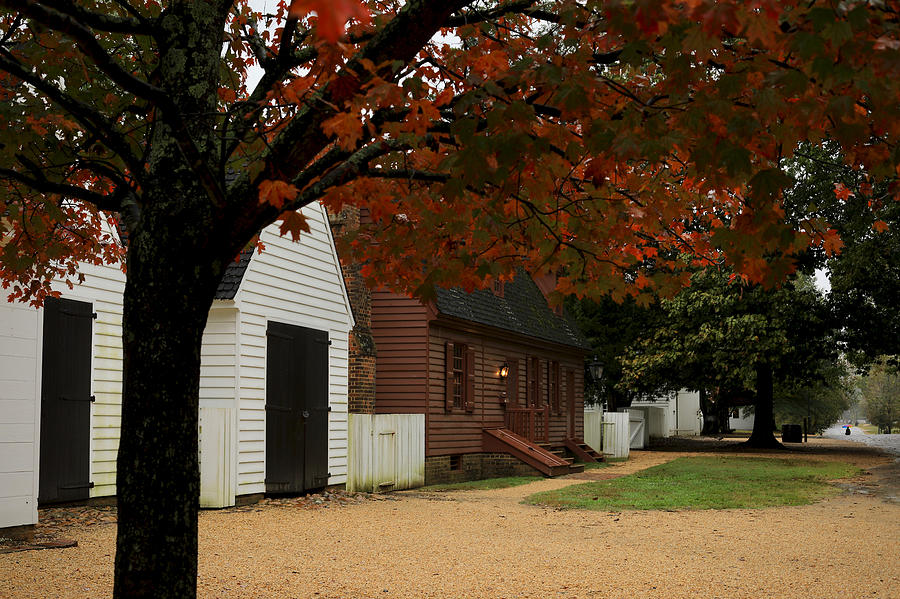 Fall Tree in the City by Rachel Morrison