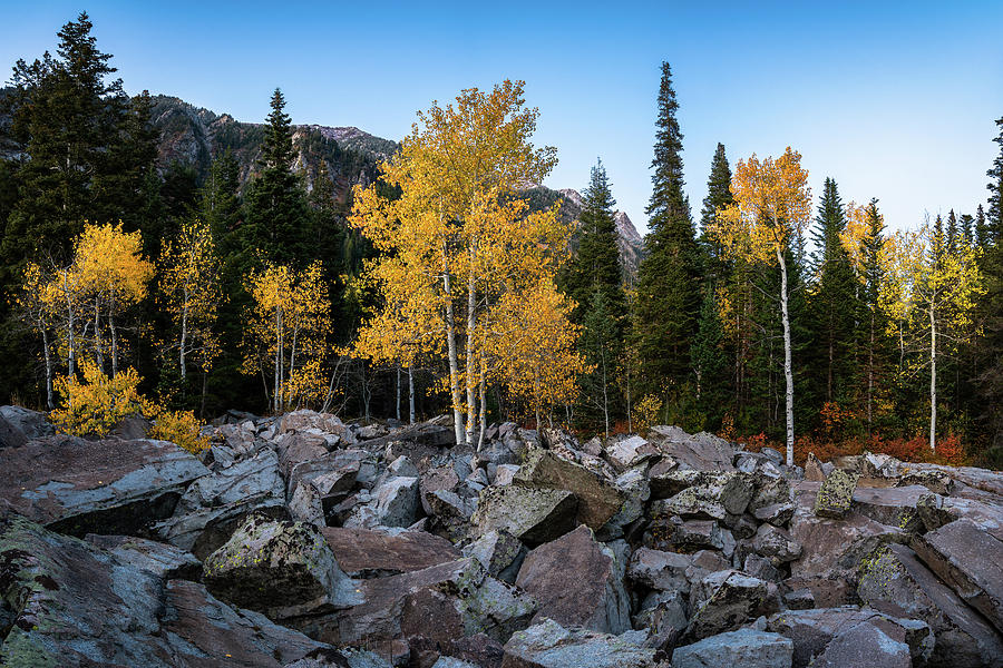 Fall Trees in the Rocks by James Udall