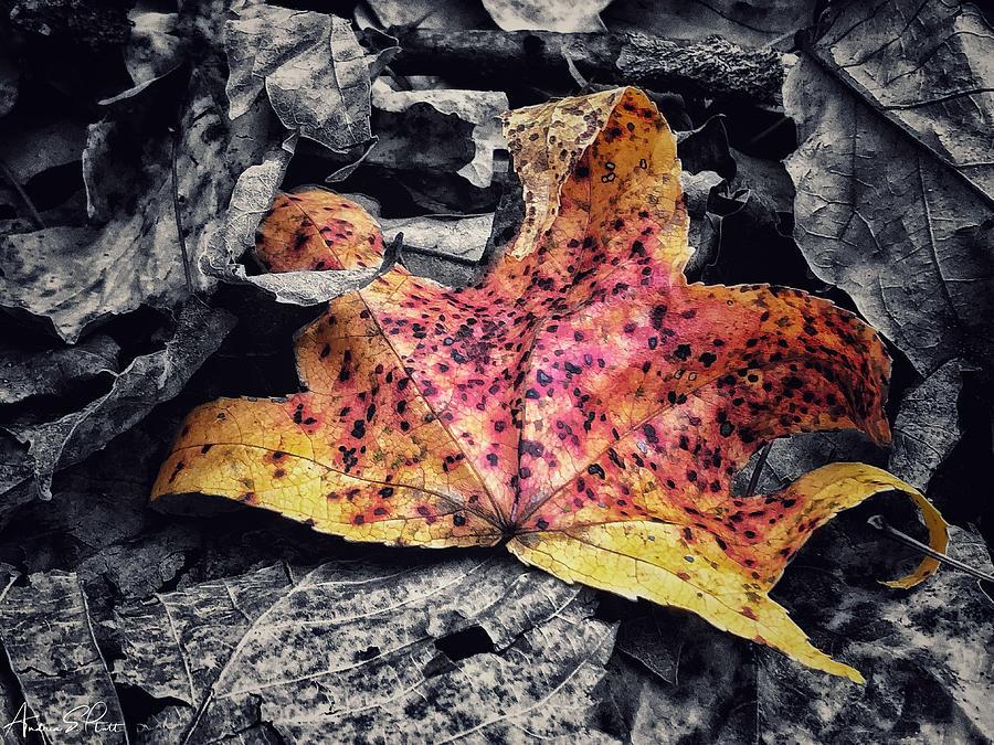 Fallen Beauty by Andrea Platt
