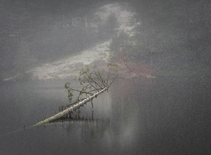 Fallen Giant by Lynn Wohlers
