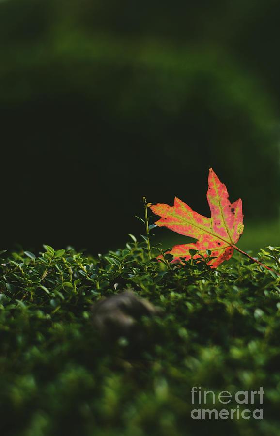 Fallen leaf - Ga by Adrian DeLeon