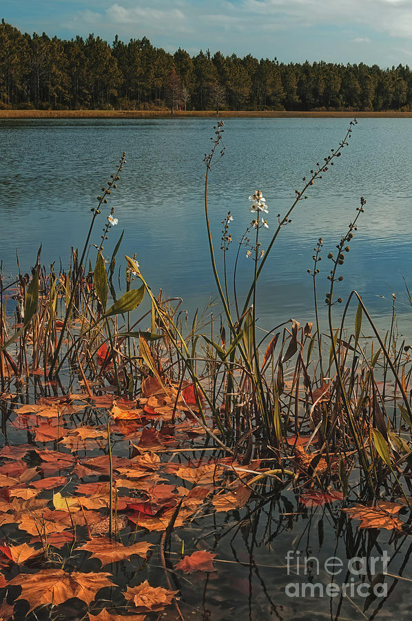 Fallen Leaves - 1293 by Marvin Reinhart