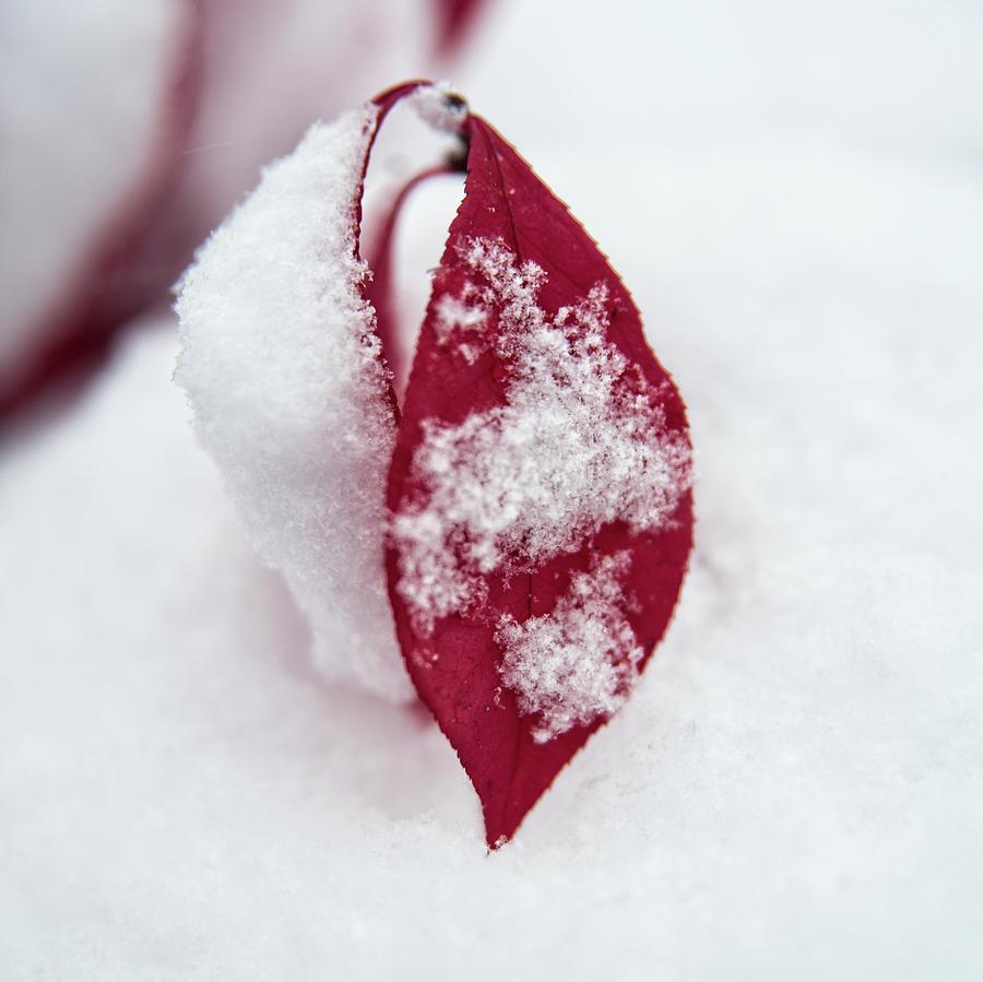 Fallen Snow by Miguel Winterpacht