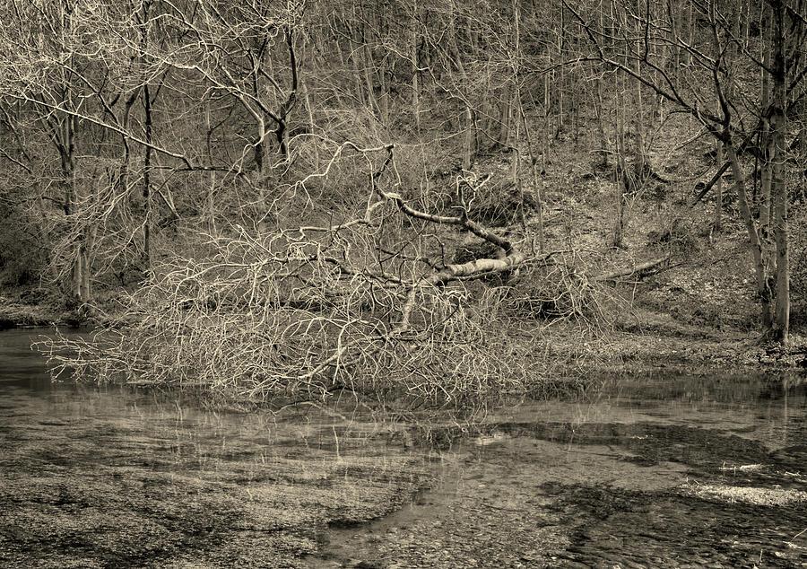 Fallen tree by Jerry Daniel