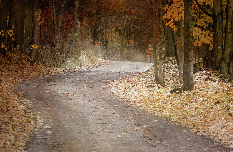 Falling Colors by Joanna Kovalcsik