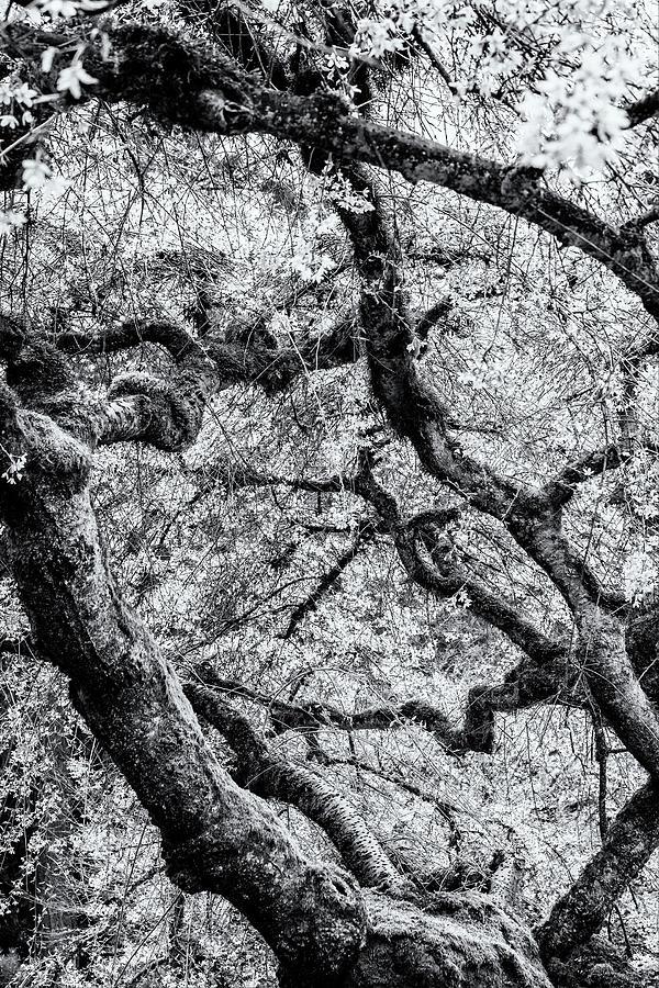 Falling into Spring bw by Belinda Greb