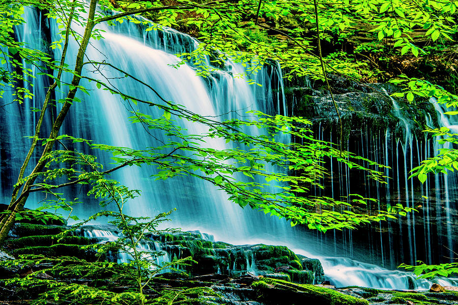 Ricketts Glen Photograph - Falls Behind Spring Trees by Paul W Faust - Impressions of Light