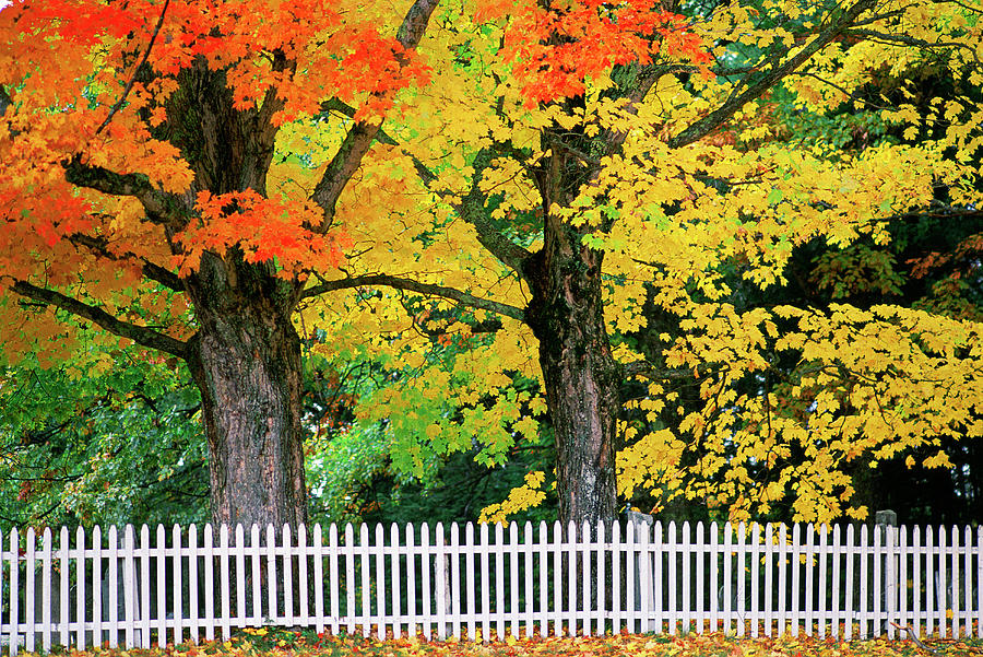 Falls Colors In New Hampshire Photograph by Great Art Productions