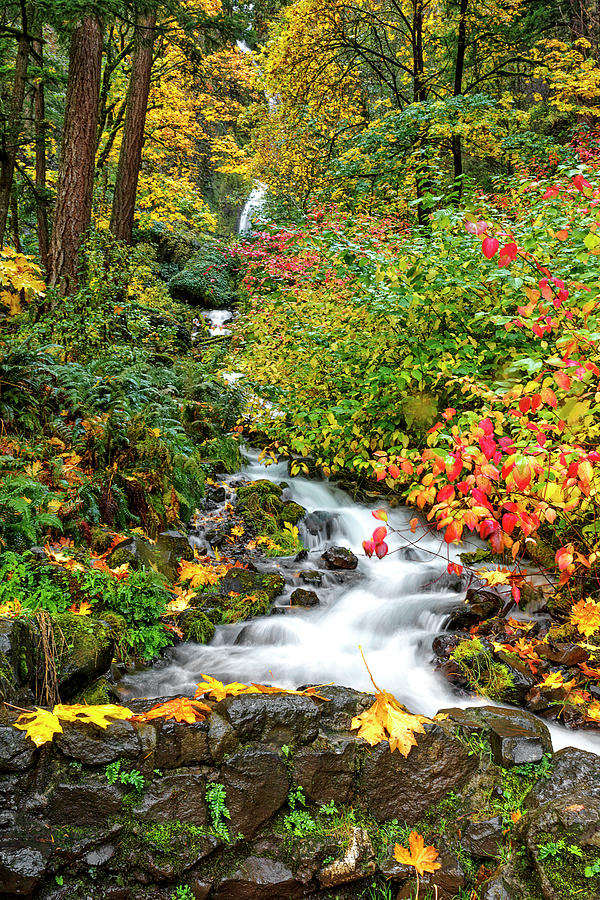 Falltime at Wahkeena Falls by Wes and Dotty Weber