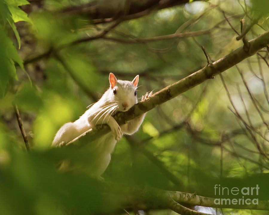 Famous Brevard White Squirrel by Kevin McCarthy