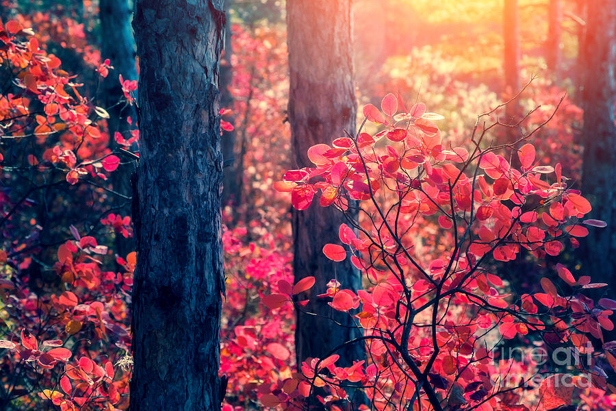 Magic Photograph - Fantastic Forest With Cotinus by Creative Travel Projects
