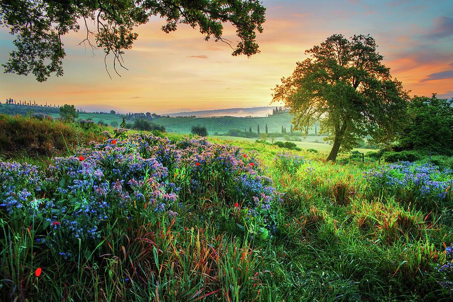 Fantastic morning by Yuri San