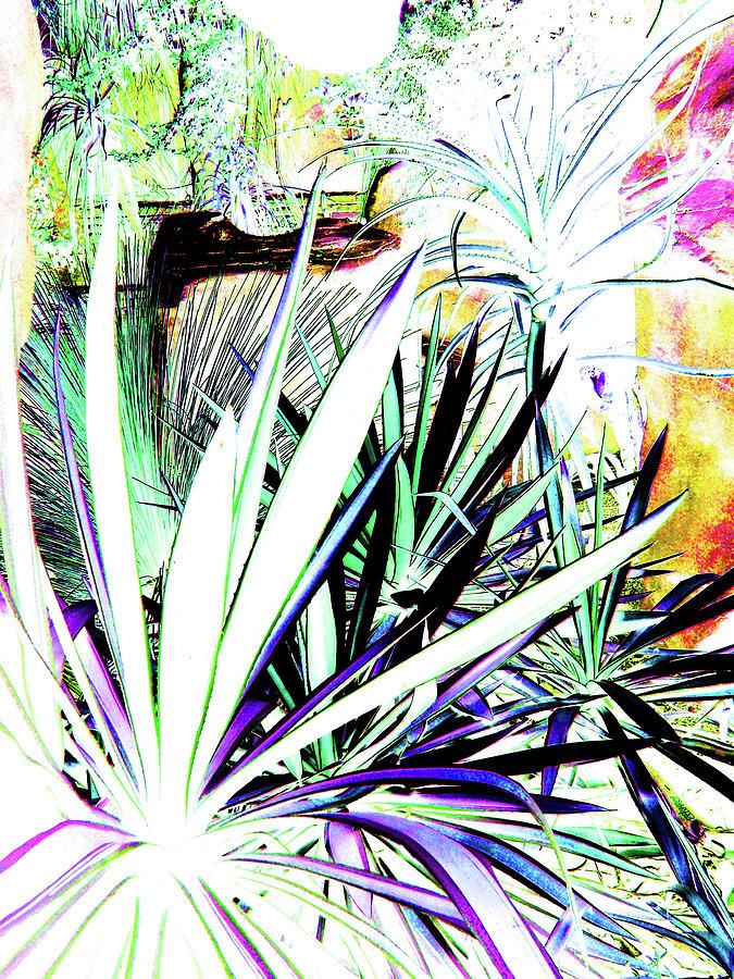 Desert Window by Toni Leland