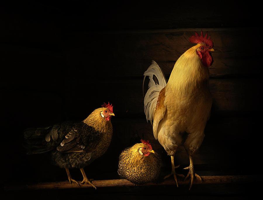 Animals Photograph - Farm Animals by Lars Anker-rasch