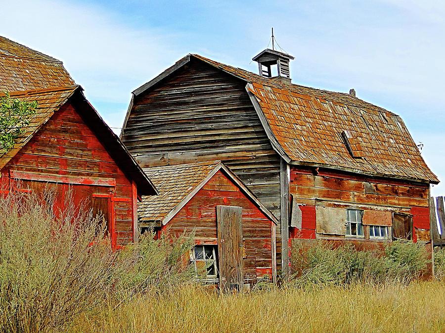 Farm Daize by Blair Wainman