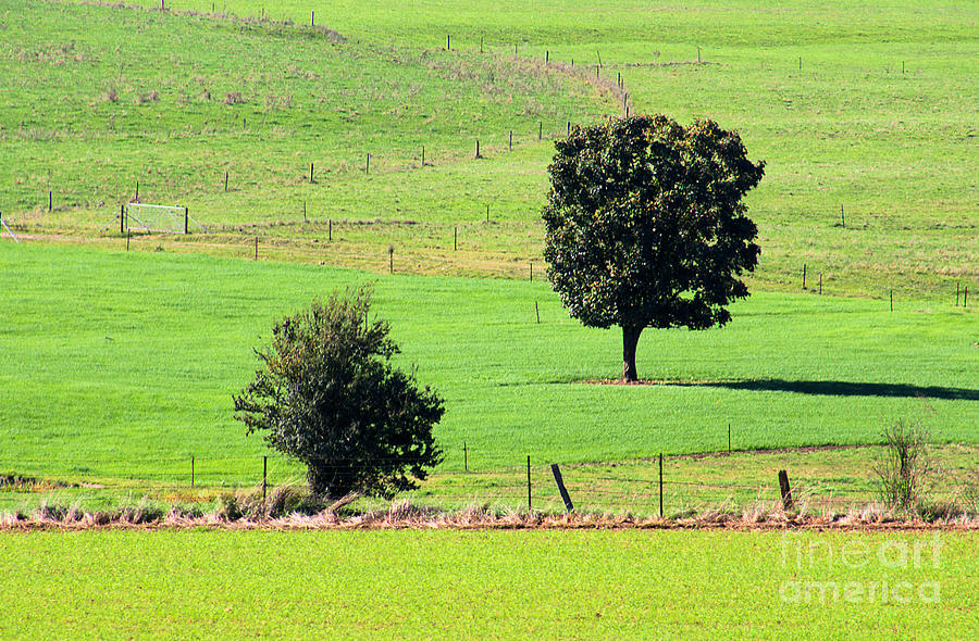Farm Fencing In Tawonga by Joy Watson