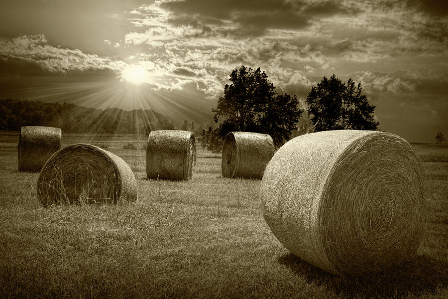 Farm Field with Hay Bales at Sunrise in Sepia Tone by Randall Nyhof