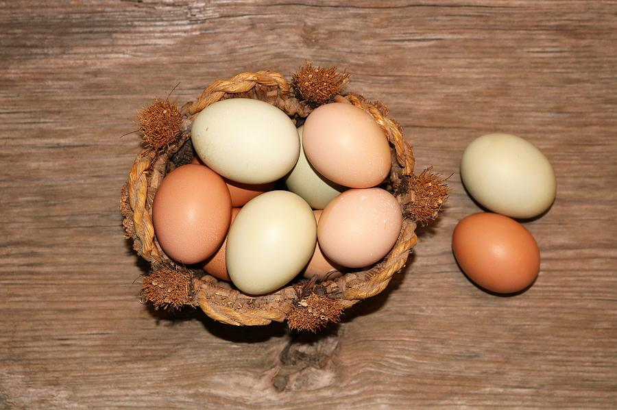 Farm Fresh Eggs in Wicker Basket by Sheila Brown