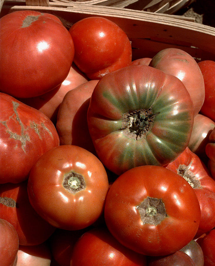 Farm-grown Tomatoes In New Paltz, N.y Photograph by New York Daily News Archive