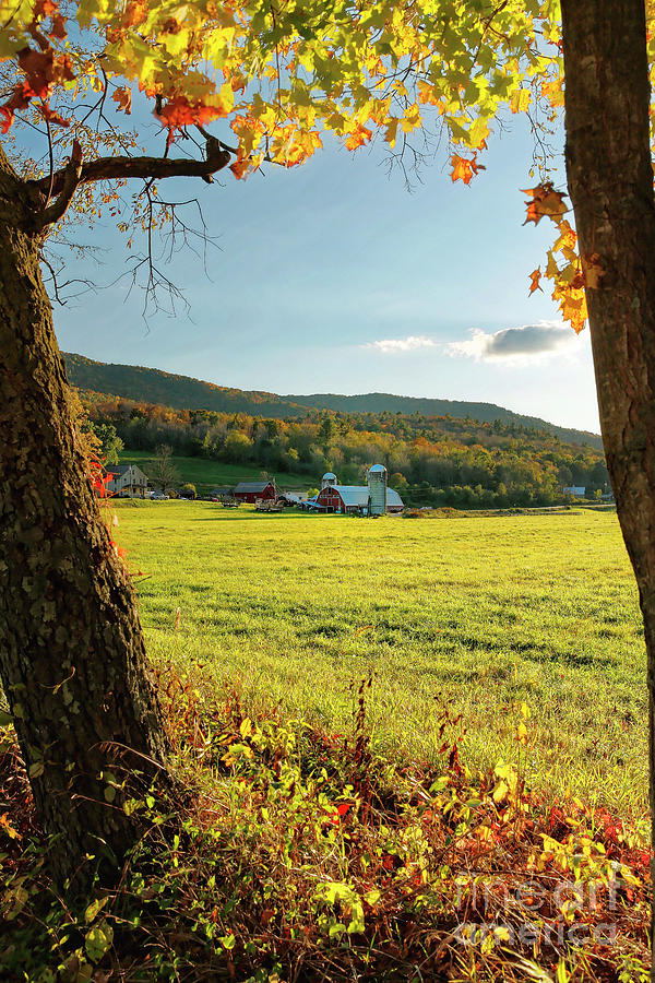Farm in Fall Afternoon Light by George Oze