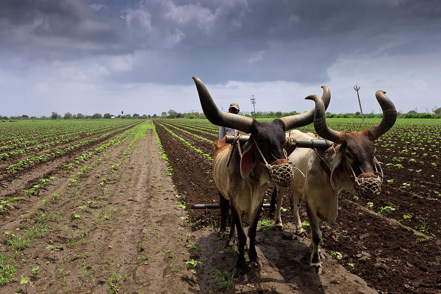 Farm In Jetpur Photograph by © Neha & Chittaranjan Desai