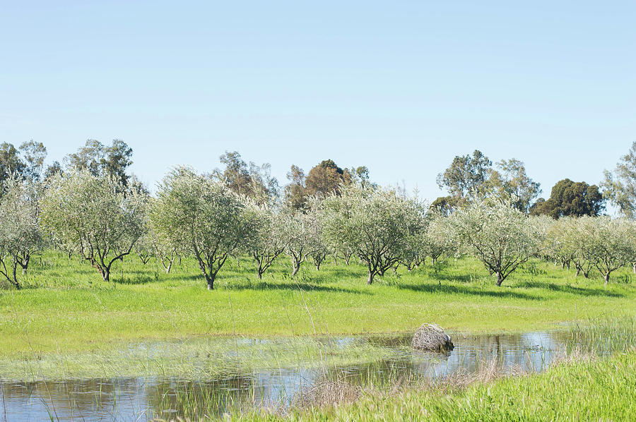 Farm Orchard by Mary Chris Hines