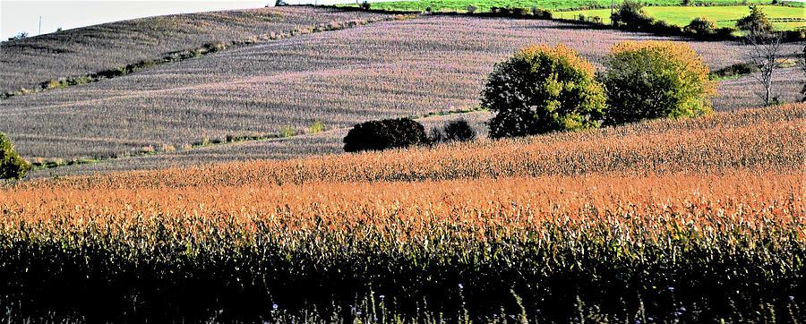 Farm Scene In Wisconsin Photograph