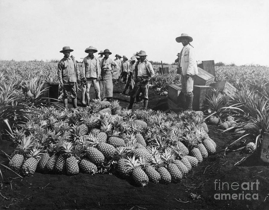 Farm Workers Beside Pineapple Stack Photograph by Bettmann