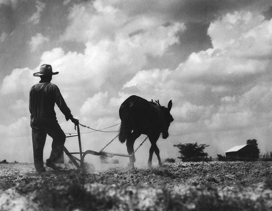 Farmer And Mule Photograph by Fpg