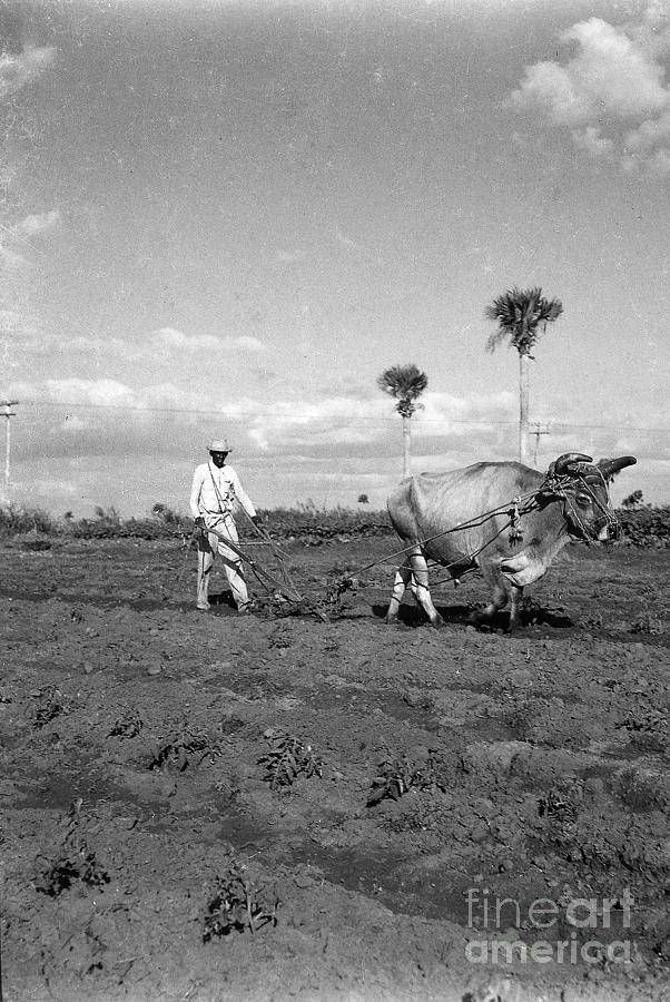 Farmer Photograph - Farmer Plowes Field by Venancio Diaz