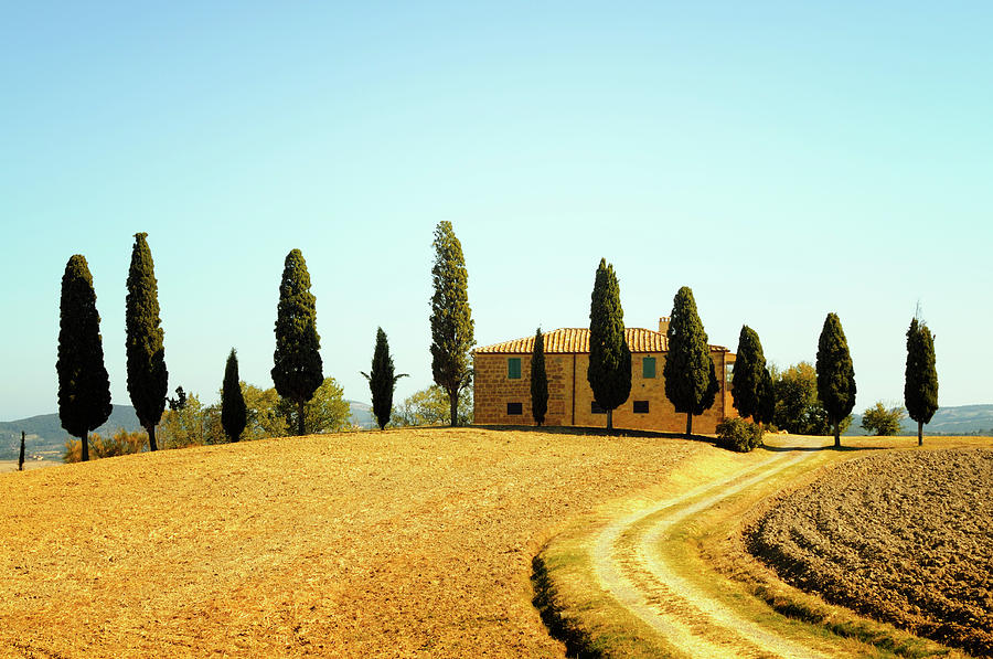 Farmhouse And Cypress Trees Photograph by Lisa-blue