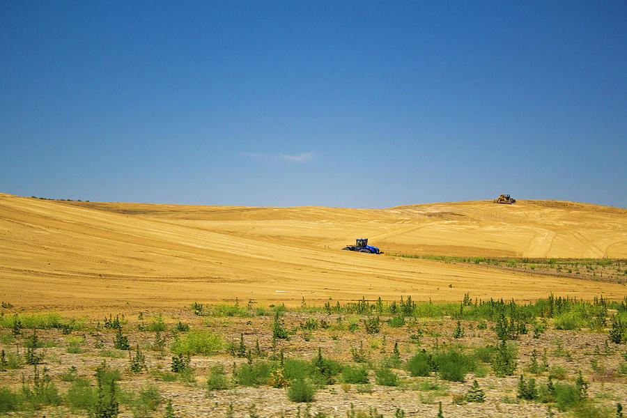 Farming by Alina Avanesian