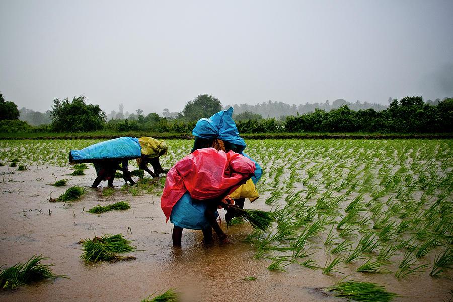 Farming Photograph by Dijis Photography