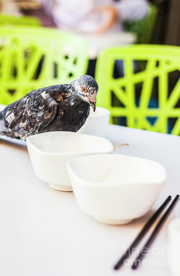 Bird Photograph - Fast Food Asian Pigeon by Jorgo Photography - Wall Art Gallery
