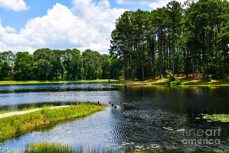 Faulkner Park by Diana Mary Sharpton