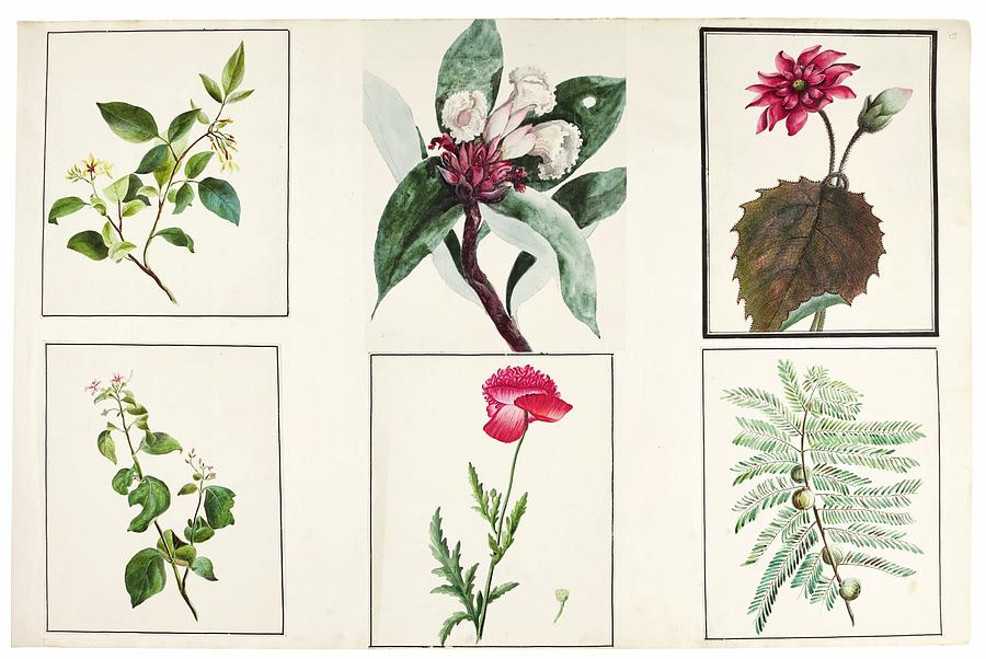Flower Painting - fauna and flora studies, India, Murshidabad, Company School, late 18th early 19th century 3 by Celestial Images