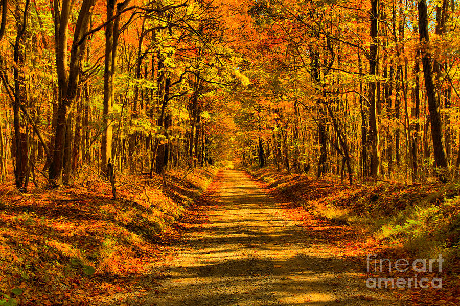 Fayette County Old Country Road by Adam Jewell