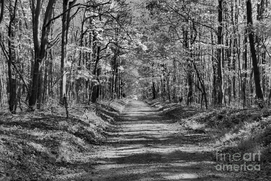 Fayette County Old Country Road Black And White by Adam Jewell