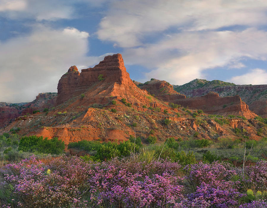 Mp Photograph - Feather Dalea, Caprock Canyons State by Tim Fitzharris
